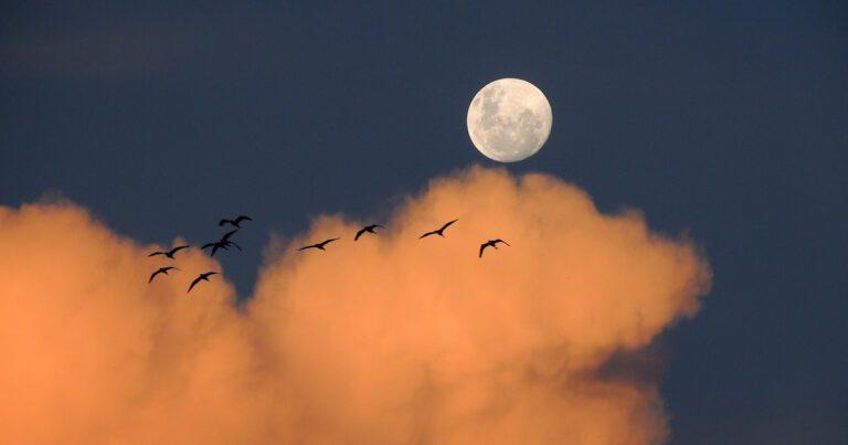 Tim Parks - La luna e i falò